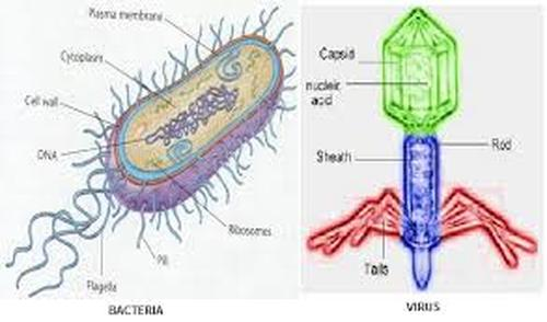 Bacteria and virus ninth grade biology bacteria the good the bad the kinda gross ccuart