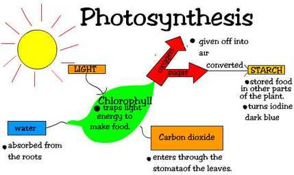 Photosynthesis ninth grade biology picture ccuart Images